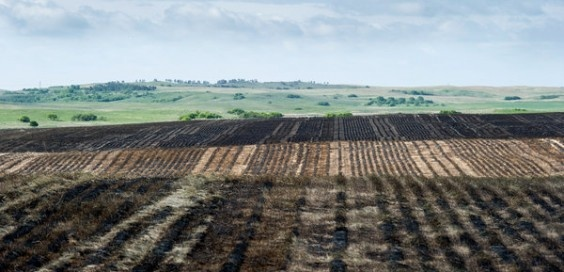 """Photo above by Deborah Kates for The New York Times: """"A grassland field in North Dakota that was burned and then seeded with soybeans. More than one million acres have become farmland in the state since 2007.""""    Story: FiredUp: Crop insurance subsidy takes the risk out of a poor business decision"""