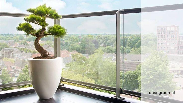 Met deze natuurgetrouwe Pinus Kunstbonsai creëert u in een handomdraai een blijvende groene decoratie, de ideale blikvanger voor op uw terras. Deze kunstbonsai is afgebeeld in een hoogglans witte lichtgewicht pot.   Deze kunstplanten van Maxifleur Kunstplanten BV zijn verkrijgbaar bij Maxifleur in Rozenburg NH, maar ook bij ons in Ammerzoden, waar wij een shop-in-shop hebben.