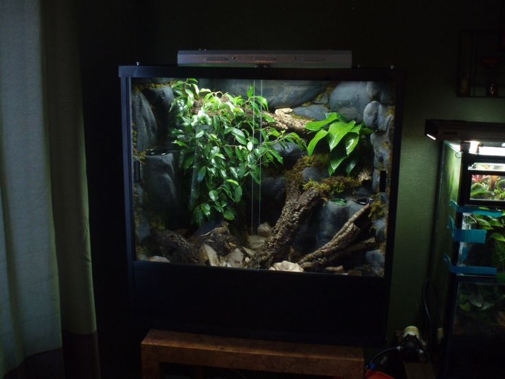 Learn how to make a crested gecko vivarium, with live plants and microfauna. Bioactive terrarium for crested geckos are easy to make - click to find out how
