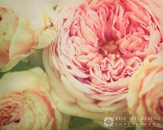 Fine Art Photography - Shabby London Roses  by wildasinsphotography, $25.00