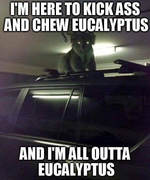 Koala from your nightmares