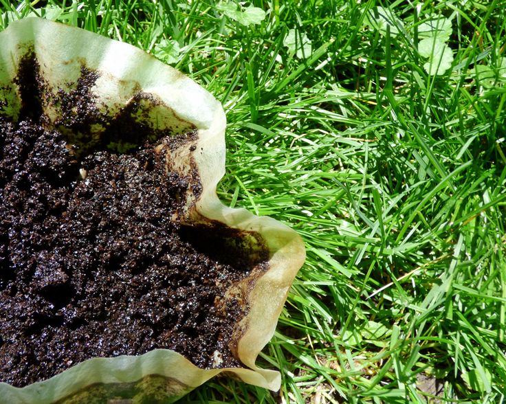 Coffee grounds as lawn fertilizer how to apply coffee - How to use coffee grounds in garden ...