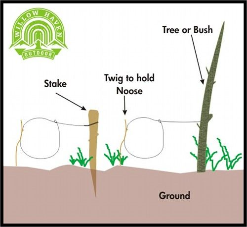 How to Build a Small Game Survival Snare... When you are are in the outdoors, you could practice some survival skills. #camping #outdoors #survival