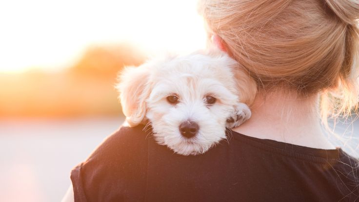 Husdjur, både hund och katt, kan bli sjuka och dö av en massa saker i hemmet. Se upp med choklad, vissa blommor, lök, nötter, salt, glykol, tråd, vindruvor.