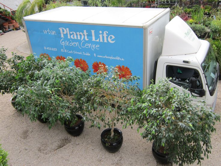 We can deliver to any part of the country just call us at 01 453 6201 or email info@plantlife.ie