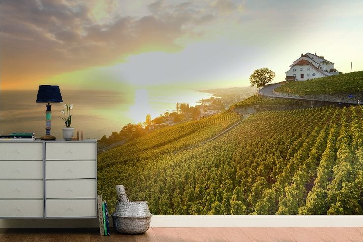 Blick über die Weinberge des Lavaux, Genfer See, Merian Fototapete, Fotograf: A.F. Selbach