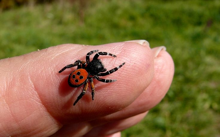 Emergency and preventative care for spider bites. Common spiders whose bark is not worse than their bite. Emergency spider bite treatment: before you make it to the hospital. Consequences of spider bites.