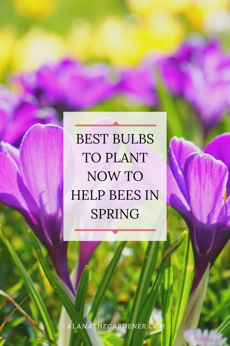 Bulbs To Help Bees In Spring With Images Planting Bulbs Easy Garden French Garden Design