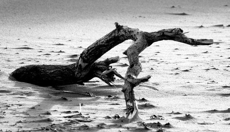 https://flic.kr/p/iJWbdU   Driftwood