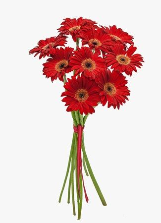 Romantic Red Gerberas