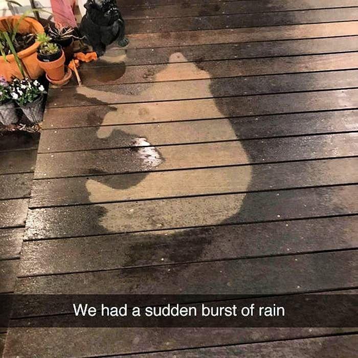 Sudden Showers Time     http://onlineclock.net/bg/rain/  #Rain #Rainy #Raining #Pets #Dogs #DogOwners #Dog #DogLovers #Doggo #DogsOfficialDog #DogsLover #DogsAreBetterThanPeople #Dogstagram #DogsOfInstagram #DogsOfInsta #DogsOnInstagram #DogOwners #PetFood #DogFood