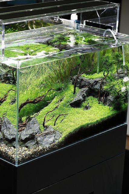 Prospettiva verde  www.ibrio.it your aquarium born here ! il tuo acquario nasce qui ! https://www.facebook.com/ibrio.it #ibrio #acquario #acquari #acquariologia #acquariofilia #aquarium #aquariums #piante #natura #pesci #zen #design #arredamento #layout #layouts #layoutdesign #roccia #roccie  #moss #freshwater #plantedtank #aquadesignamano #tropicalfish #fishofinstagram #aquaticplants #natureaquarium #nanotank #reefkeeper #nanoreef #saltwateraquarium from web