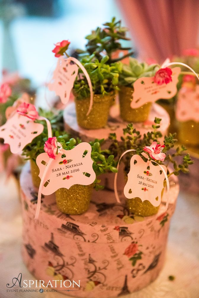 Marturii nunta / botez Plante suculente Aspiration Events