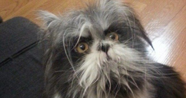 The Internet Has Gone Into Melt Down - Is This Animal A Cat Or A Dog? :http://gossfeed.com/2016/11/10/cat-or-dog/