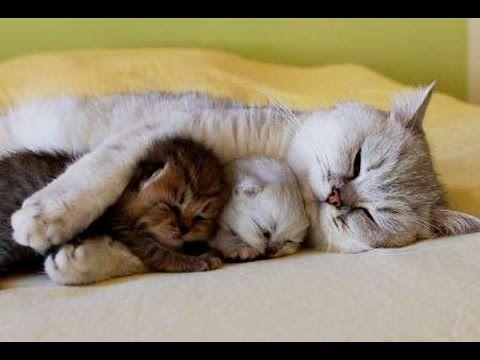 Los Gatos más Cariñosos del mundo! Gatos que Abrazan!! - YouTube