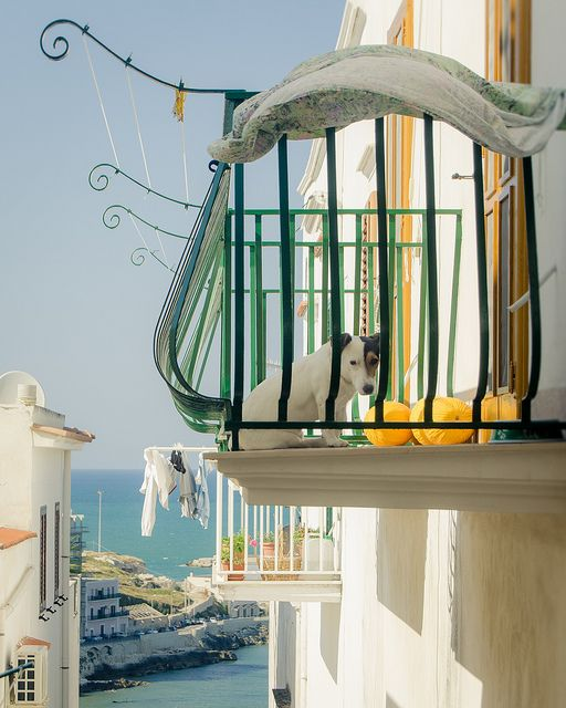 A dog's life in Vieste   Flickr - Photo Sharing!