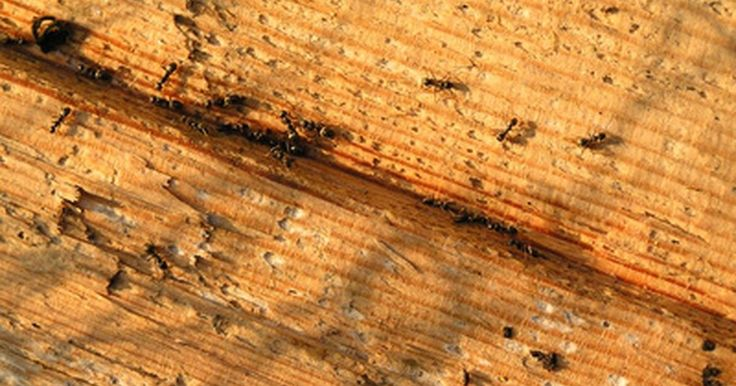 Cómo deshacerte de las grandes hormigas negras en casa. Hay muchos tipos diferentes de hormigas que pueden entrar en tu casa. Todas ellas son molestas, pero algunas son más peligrosas que otras. Si ves grandes hormigas negras en tu casa lo más probable es que sean las hormigas carpinteras. Es por eso que, si ves este tipo de hormigas u otras con alas, debes tomar algunas medidas para deshacerte de ...