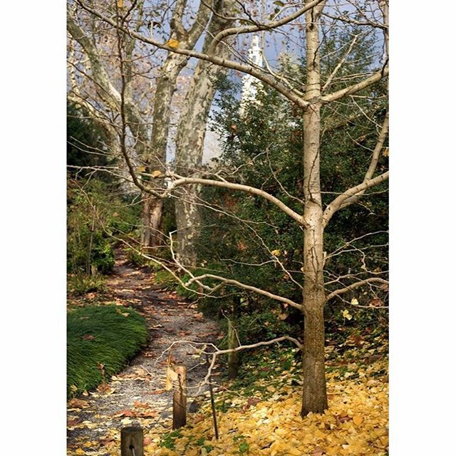 Entorno Cantábrico. #Gijón #Xixón #Asturias #Asturies #AsturiasConSal #NorthernSpainWithZest #Jardín #Botánico #Atlántico #Atlantic #Botanic #Garden #Invierno #Winter #Caducifolias #Deciduous