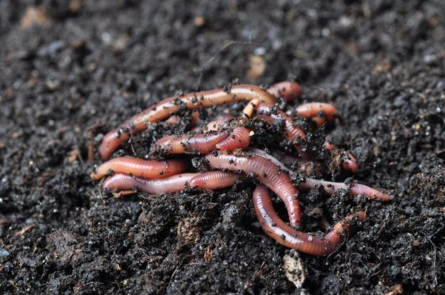 The Essential Benefits Of Worm Farming | Homesteading For Beginners | Try Many Types Of Farming For You And Your Homestead