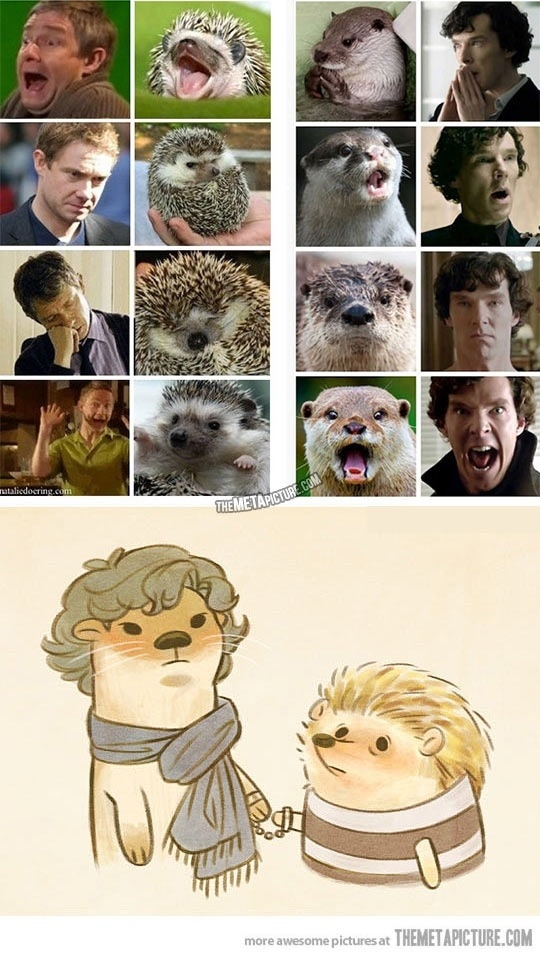 16 Dinge, die alle Fans, die auf Sherlock warten, wissen, dass sie wahr sind   – Sprüche / Witze