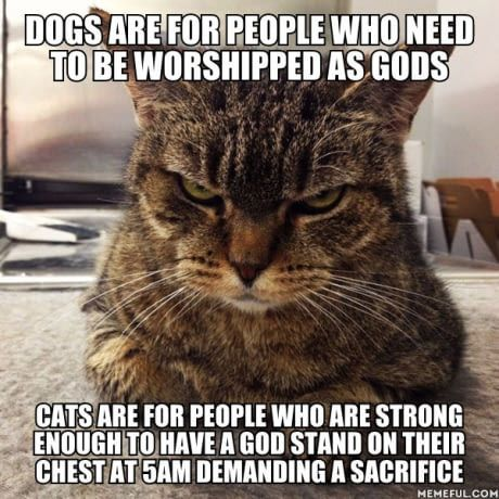 Dogs and cats are life