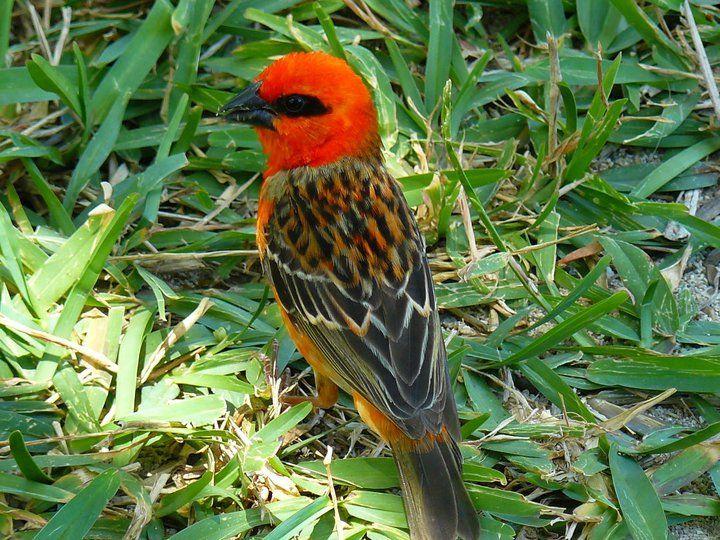 Piękne ptaki #podroze #mauritius #tourism