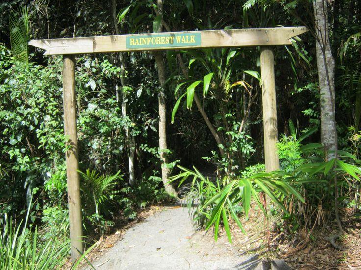 Rainforest walk Botanic Gardens, Mt Tamborine