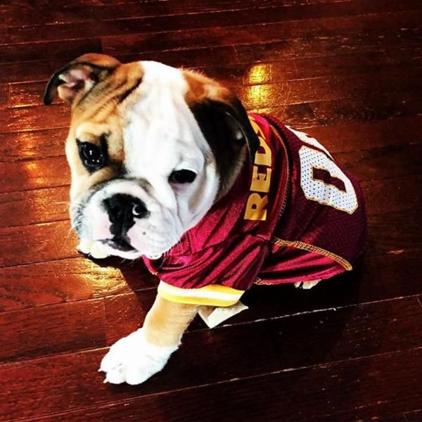 best website 24916 fe481 redskins dog jersey