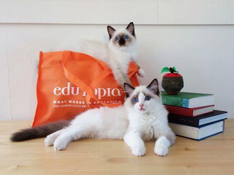 Five-Minute Film Festival: The Best Cat Videos for Educators