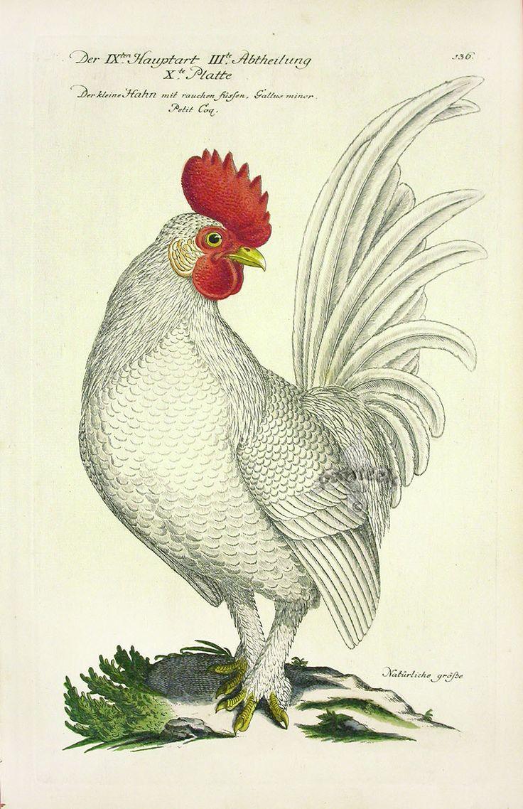 Frisch Antique Bird Prints 1733