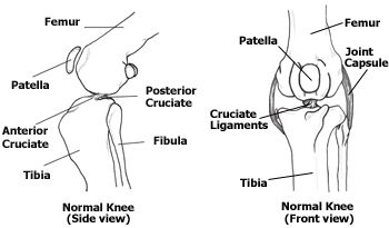 Normal Knee Anatomy- This is another site that describes the procedures for a ruptured ACL.