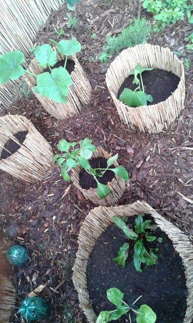 Die besten 25+ Rindenmulch Ideen auf Pinterest Vorgarten ideen - vorgartengestaltung mit rindenmulch und kies