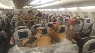 Eighty birds of prey take flight - on jet to Jeddah - BBC News