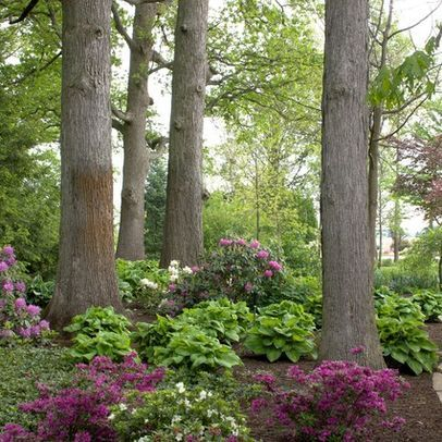Beautiful hosta garden in the woods We have a tree row we are clearing and I want to do this!!