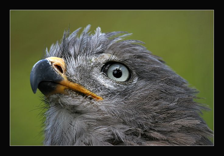 Look into my eyes!  Magnificent birds at World of Birds in Hout Bay