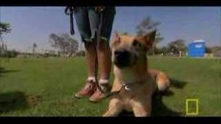 Dog Whisperer: A Lesson in Aggression, via YouTube.