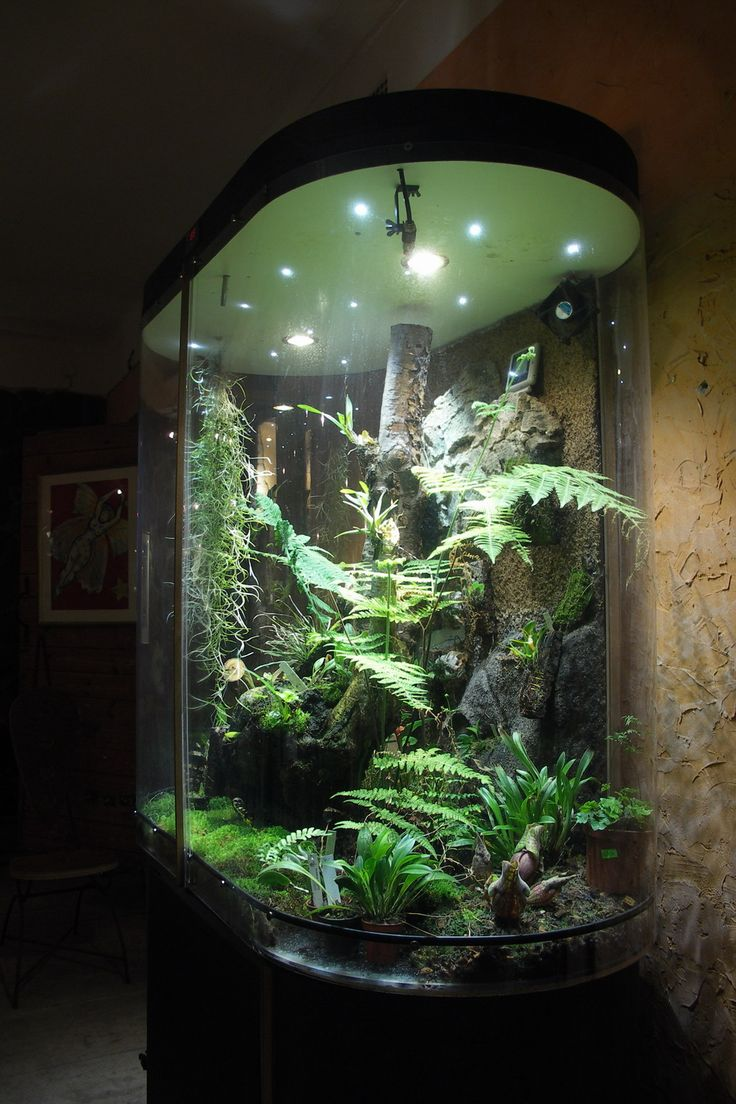 25 Best Ideas About Snake Terrarium On Pinterest