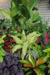 105 Best Images About Garden Tropical On Pinterest Banana Plants Tropical Gardens And