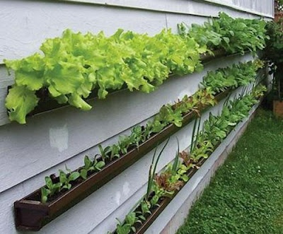 Recycled gutters make great space-saving container gardens.