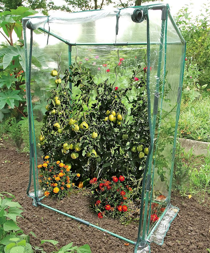 ber ideen zu tomaten gew chshaus auf pinterest. Black Bedroom Furniture Sets. Home Design Ideas