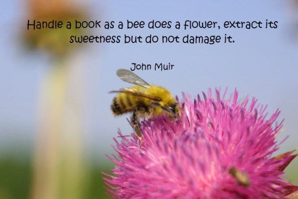Quote by John Muir
