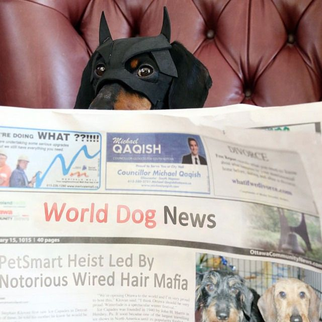 BATDOG catching up on some recent news in the dog world..