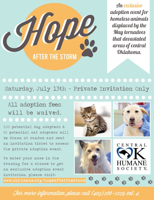 Talking Dogs at For Love of a Dog: Oklahoma Tornado Pet Adoption Event July 13