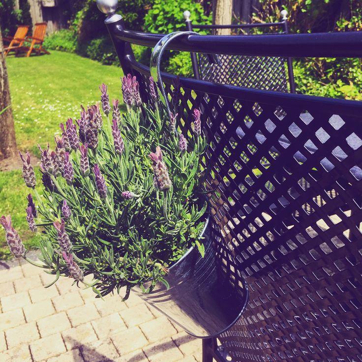 Hanging flowerpot with lavendre / hangende zinken bloempot met lavendel aan rugleuning tuinstoel