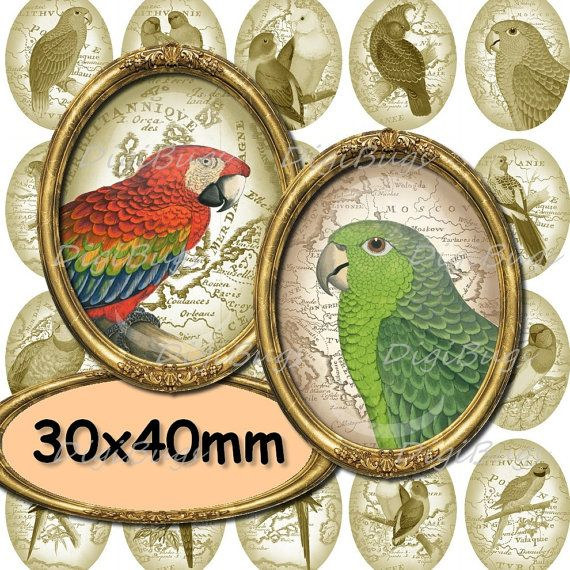 Oval Parrot Images, Digital Collage Sheet, Vintage Map, 30 x 40 mm Oval Pendant Images, Printable Parrot Illustrations, Instant Download, a2