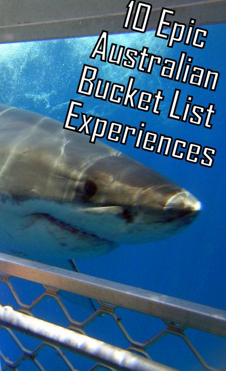 Cage diving with Great White Sharks in Australia anyone?! One of 10 Australian bucket List Experiences! ---> http://www.mappingmegan.com/australian-bucket-list-experiences/