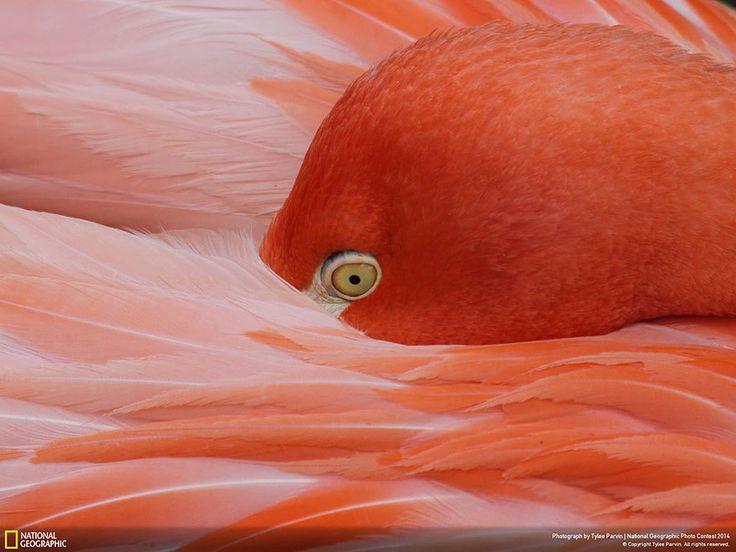 Лучшие фото природы: заявки на участие в конкурсе 2014 ...