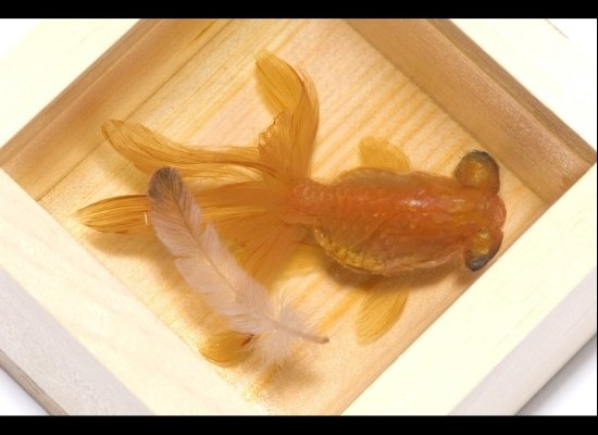 Best Riusuke Fukahori Images On Pinterest Goldfish Resin - Incredible 3d goldfish drawings using resin