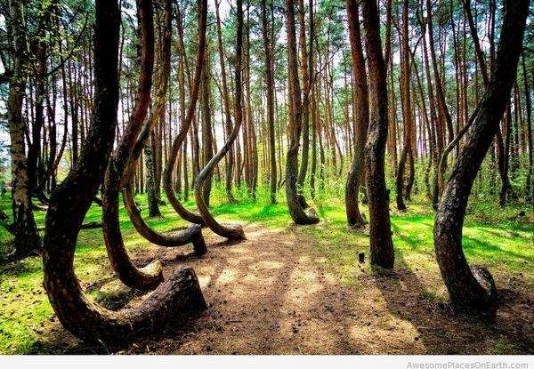 12. The crooked forest