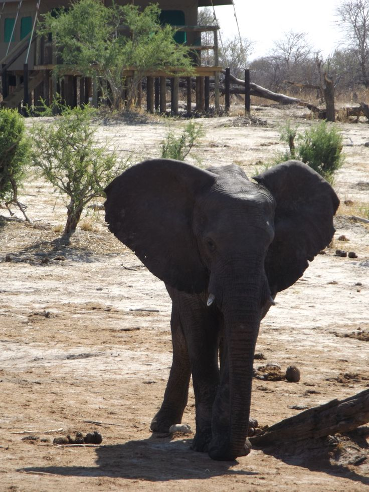 Elephant Sands Lodge in Botswana is a must for all elephant lovers